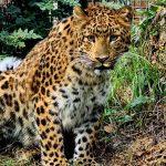 leopardica-zoo-16102020
