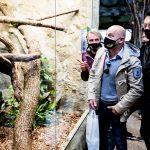 ljenivci-zoo-20102020-19