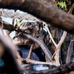 ljenivci-zoo-20102020-25