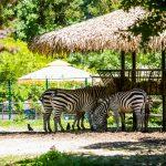 rodjendan-zoo-13062020-126