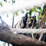 ljenivci-zoo-20102020-53