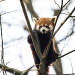 bundevijada-zoo-04112018-19